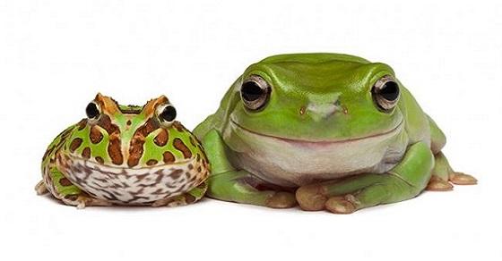 nằm mơ thấy ếch