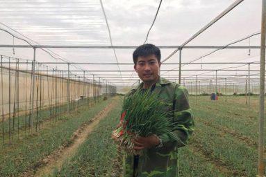 Lãng tử 9X về làng trồng hành