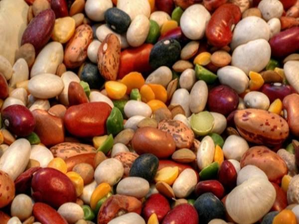 Nằm mơ thấy hạt đậu có ý nghĩa gì?