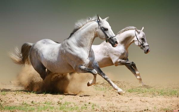 Nằm mơ thấy ngựa đánh mang đến điềm báo trước gì